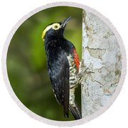 Yellow-tufted Woodpecker Round Beach Towel