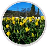 Yellow Tulips Before White Picket Fence Round Beach Towel