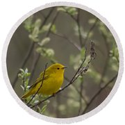 Yellow Warbler -1 Round Beach Towel