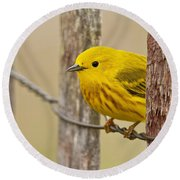 Yellow Warbler Pictures 90 Round Beach Towel