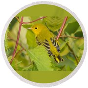 Yellow Warbler Round Beach Towel