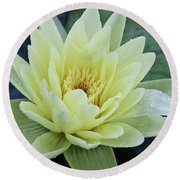 Yellow Water Lily Nymphaea Round Beach Towel