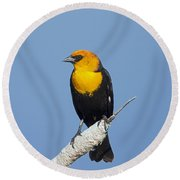 Yellowheaded Blackbird Round Beach Towel
