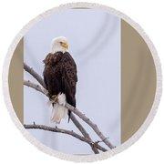 Yellowstone Bald Eagle Round Beach Towel