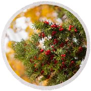 Taxus Baccata Or Yew Red Fruits On Twig  Round Beach Towel