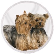 Yorkshire Terrier Dogs Round Beach Towel
