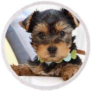 Yorkshire Terrier Puppy Round Beach Towel