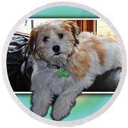 Yoshi Havanese Puppy Round Beach Towel by Barbara Griffin