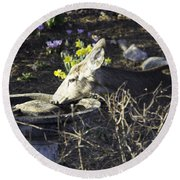 You Are Not A Bird Round Beach Towel