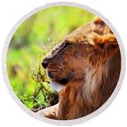 Young Adult Male Lion On Savanna. Safari In Serengeti Round Beach Towel