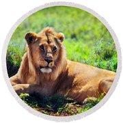 Young Adult Male Lion On Savanna. Safari In Serengeti. Tanzania Round Beach Towel