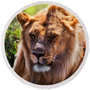 Young Adult Male Lion Portrait. Safari In Serengeti Round Beach Towel