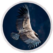 Young Andean Condor Round Beach Towel