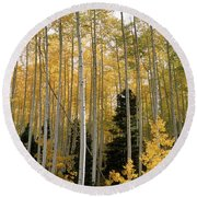 Young Aspens Round Beach Towel