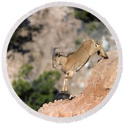 Young Auodad Sheep Descending The Canyon Round Beach Towel