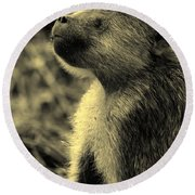 Young Baboon In Black And White Round Beach Towel
