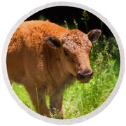 Young Bison Round Beach Towel