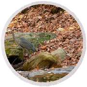 Young Blue Heron Round Beach Towel