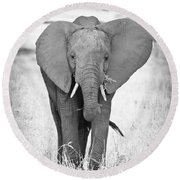 Young Bull Elephant Round Beach Towel