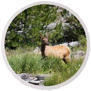 Young Bull Elk - Yellowstone National Park - Wyoming Round Beach Towel