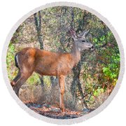 Young Doe Round Beach Towel