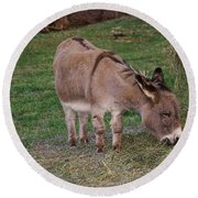 Young Donkey Eating Round Beach Towel