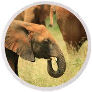 Young Elephant Round Beach Towel