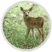 Young Fawn In The Woods Round Beach Towel