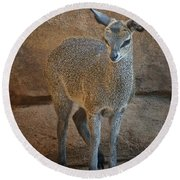 Young Female Klipspringer Round Beach Towel