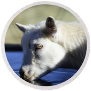 Young Goat Round Beach Towel
