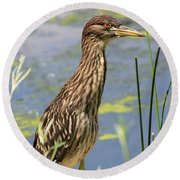 Young Heron Round Beach Towel