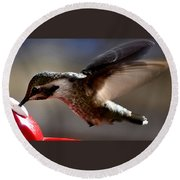 Young Hummingbird Male Anna Round Beach Towel