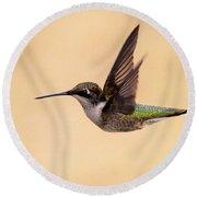 Young Hummingbird - Sailor Round Beach Towel