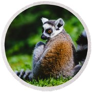 Young Lemur Round Beach Towel