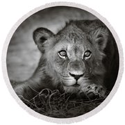Young Lion Portrait Round Beach Towel