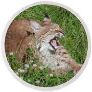 Young Lynx Yawning Round Beach Towel