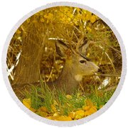 Young Male Buck Round Beach Towel