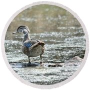Young Male Wood Duck Round Beach Towel
