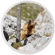 Young Marmot Round Beach Towel