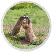 Young Marmots Round Beach Towel