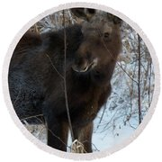 Young Moose 4 Round Beach Towel