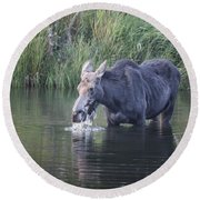 Young Moose Round Beach Towel