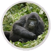 Young Mountain Gorilla Round Beach Towel