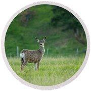 Young Mule Deer Round Beach Towel