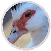 Young Muscovy Closeup Round Beach Towel