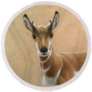 Young Pronghorn Round Beach Towel by James W Johnson