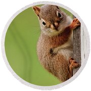 Young Red Squirrel Round Beach Towel