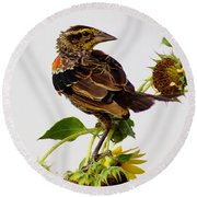 Young Redwing In The Wind Round Beach Towel