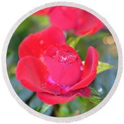 Young Rose Of November Round Beach Towel