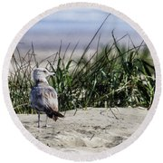 Young Seagull No. 1 Round Beach Towel